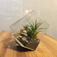 Glass Diamond Terrarium / Herkimer / Live Air Plant / Tillandsia