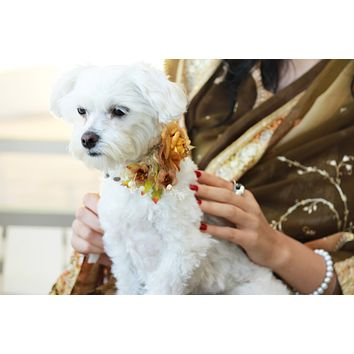 Gold Floral wedding Dog Collar, Cute Floral pet Collar Wedding accessory