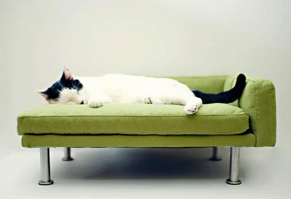 Cats on leather furniture