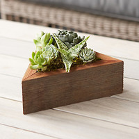 Living Succulent Triangle Planter