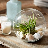 LIVE TABLETOP AIRPLANT GARDEN