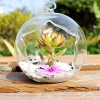 Discount sale 2PCS Hanging 10CM/12CM glass air plant succulent terrarium indoor garden