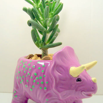 Succulent planter  DIY kit Dinosaur Purple or Green Desk Accessories