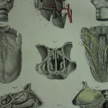 1864 antique anatomy plate - old hand-color poster of the tongue nose throat - vintage print about larynx mouth tong oral nasal  - 9x14""