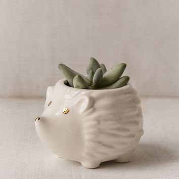 Plum & Punch Hedgehog Planter | Urban Outfitters