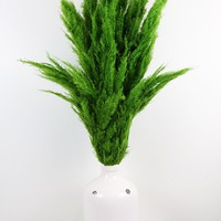"Dried Pampas Grass in Dark Green - 5-6 Stems per Bunch - 30""-42"" Tall"