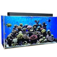 CLEAR-FOR-LIFE 240 Gallon Rectangle UniQuarium  3-in-1 System