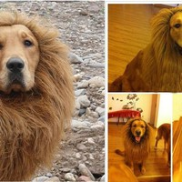 Large Pet Dog Cat Lion Wigs Mane Hair Festival Party Fancy Dress Clothes Costume/Pet Costume Lion Wig