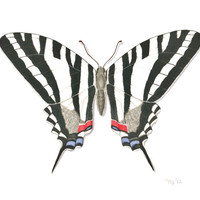 "Zebra Swallowtail Butterfly Archival Print - Fine Art Reproduction of Original Butterfly Illustration, Black and White Butterfly 8.5"" X 11"""