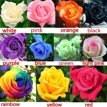 200Pcs Beautiful Colorful Rainbow Rose Flower Seeds Yard Garden Plant Decor