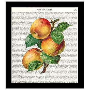 Kitchen Decor 8x10 Dictionary Art Print Apples Botanical Illustration