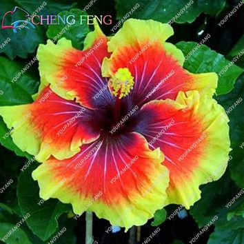 100pcs/bag Hibiscus Flower bonsai Giant Hibiscus bonsai Bonsai Tree Perennial Flowers Plant For Home Garden Semillas Easy To Gro