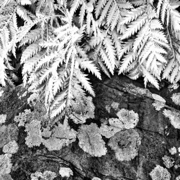 Fern Black And White Photograph