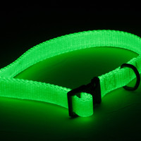 Petflect Spectra-Glo Glowing Dog Collar