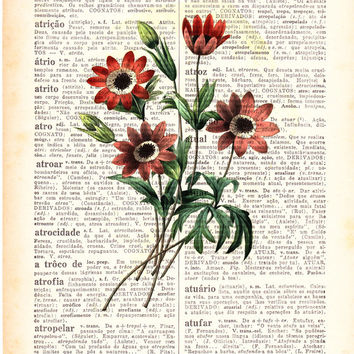 Wall art Vintage country side  Illustration Daisies bouquet  collage Print on Vintage Book page- Home wall decor