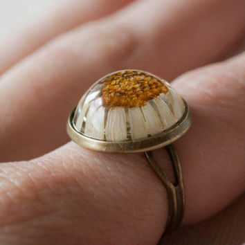 Ring with chamomile. Bronze ring with real pressed flower jewelry daisy premises in epoxy resin
