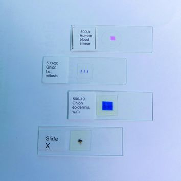 Prepared Microscope Slides