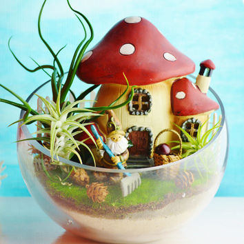 Mushroom House Terrarium with Gnome ~ Large Glass Open Slope Bowl Terrarium Kit with 3 AirPlants ~ Mini Basket with Apples ~ Fence ~ Gift