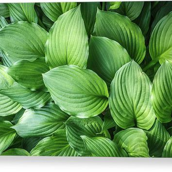 Beautiful Green Arc-shaped Leaves Canvas Print