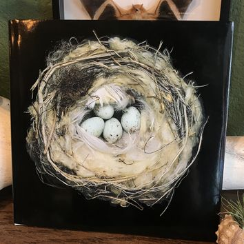 Nests: by Sharon Beals