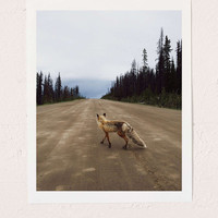 Kevin Russ Road Fox Art Print - Urban Outfitters