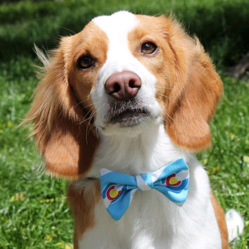Colorado bow tie dog collar - blue with white stripes : small, medium and large, 45% recycled material