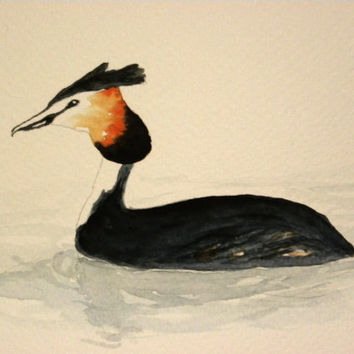 Great crested grebe in a lake in Finland. Original watercolor painting. Unique Finnish bird art.