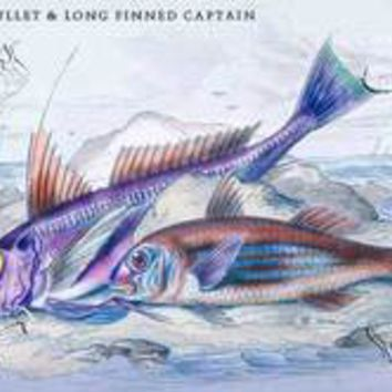 Red Surmullet and Log Finned Captain