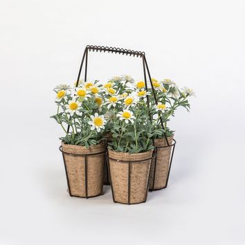 SET OF 4 DAISIES IN METAL CONTAINER