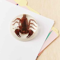 Scorpion Paper Weight
