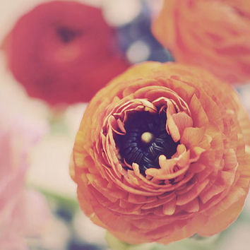 Flower Photograph, Ranunculus, Vintage, Orange, Soft, Pink, Feminine, Home Decor, Shabby Chic, Cottage Decor