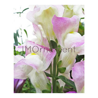Flower Printable. Snapdragon. Photo Download. 8x10. Pink Wall Art. Flower. Photo Art Print. Instant Download