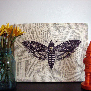Canvas Wall Art Vintage Moth / Butterfly by Stoic on Etsy