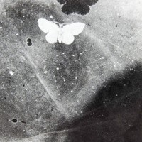 Tiny Moth Shadow Abstract Photograph