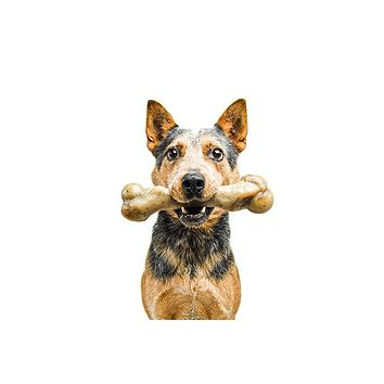 Pet Qwerks Zombie BarkBone with Real Bacon Dog Chew Toy for Aggressive Chewers, Made in USA