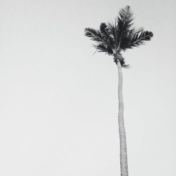 Black and White Beach Photography | Minimalist Art Print | Palm Tree Print | Photography Print | Black and White Coastal Wall Art Prints