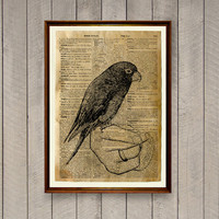 Parrot poster Bird print Rustic decor Animal art WA840