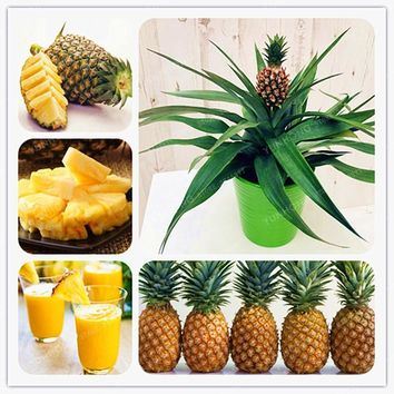100 Pcs Ananas Comosus Pineapple Bonsai Heirloom Fruit Garden Bonsai Sweet Juicy Delicious Fruit Potted plant DIY Bonsai Plant