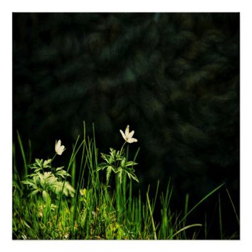 White wildflowers on a dark riverbank poster