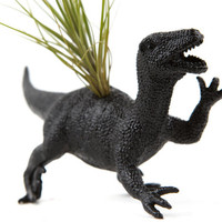 Black Dinosaur planter with air plant GREAT GIFT for college, office, or desk decor