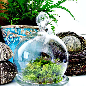 Glass Cloche Terrarium Planter/ Small Bell Jar / DIY Terrarium Kit / Easy Houseplant
