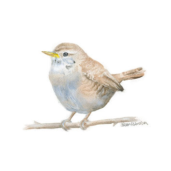 Wren Watercolor