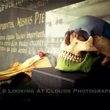 skull art photo, colorful human skull, educational oddity, macabre art skull, blue and green cranium, skull with teeth and words, spooky