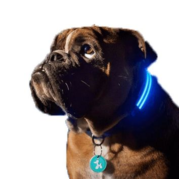 Amazing LED Light Dog Collar for All Dogs (S, M & L) - Bright LED Dog Collar