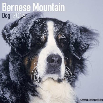 Bernese Mountain Dog Calendar - Only Dog Breed Bernese Mountain Dogs Calendar - 2016 Wall calendars - Dog Calendars - Monthly Wall Calendar by Avonside