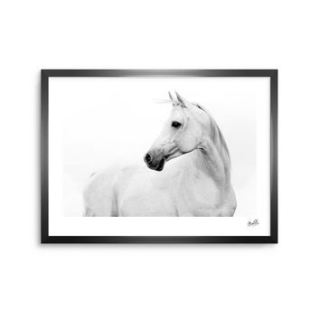 Pale Horse - White Black Animals Photography Framed Art Print