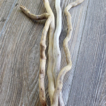 Natural Beach House Decor , Nautical Home , 4 Curvy Driftwood Branches for Vase Filler & Art Supplies NH4