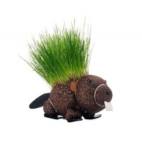 Grow Your Own Hairy Beaver