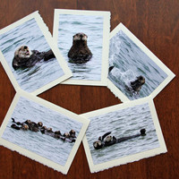 Five Sea Otter Nature and Wildlife Photo Note Cards - Set 8