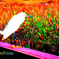 Bird Landscape Photo - photography print Grasslands Scenery Nature native american reservation culture animals south florida touched edited
